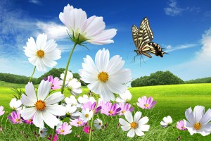 3d-butterfly-wallpaper-free
