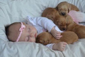 Baby Wallpapers puppies