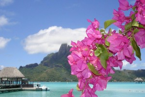 Beach Wallpapers flowers