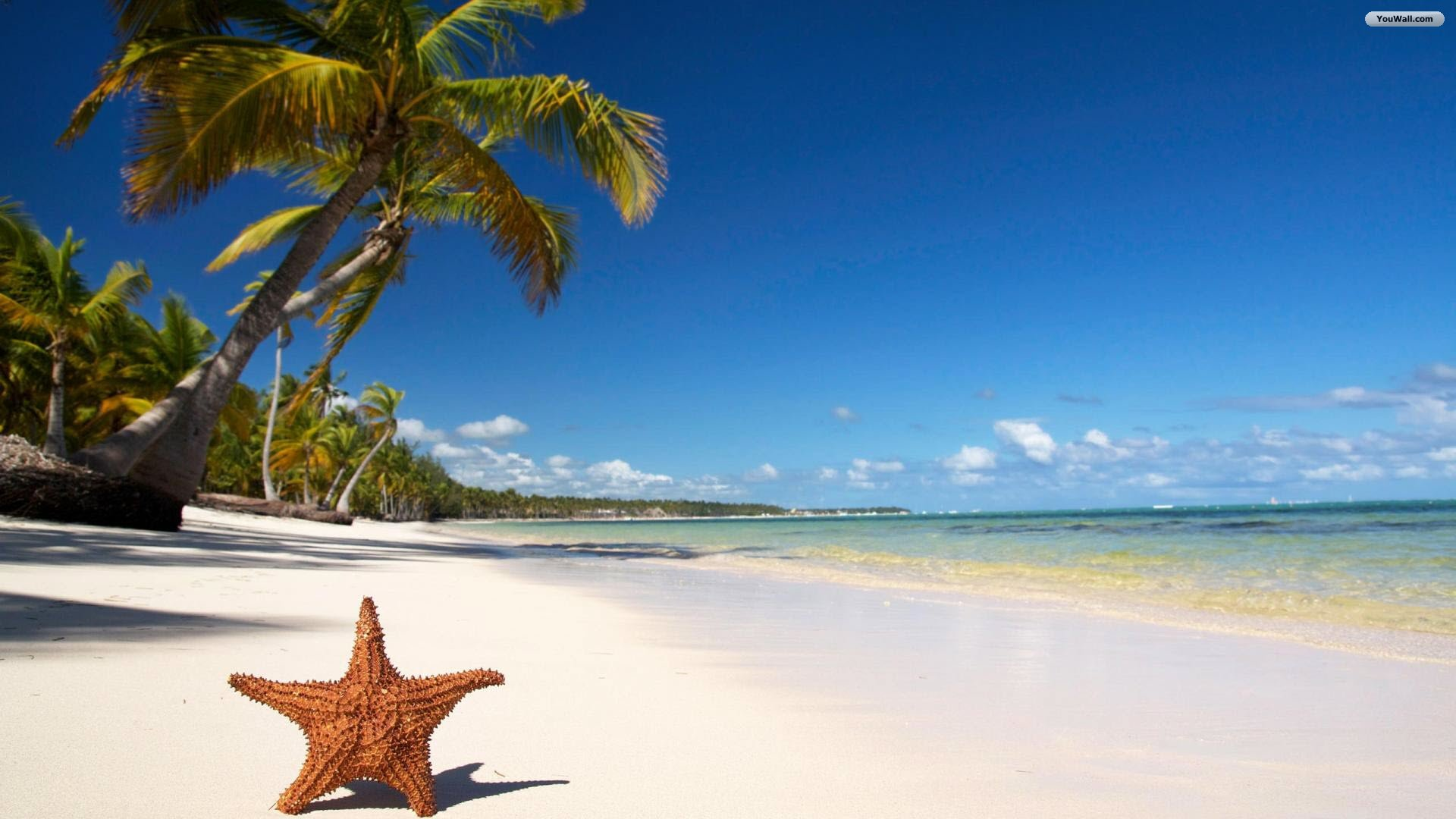 Beach Wallpapers star fish