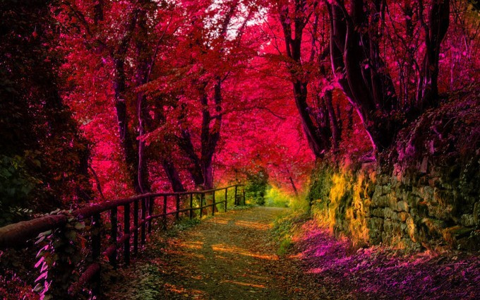 Forest Wallpapers HD pink leaves