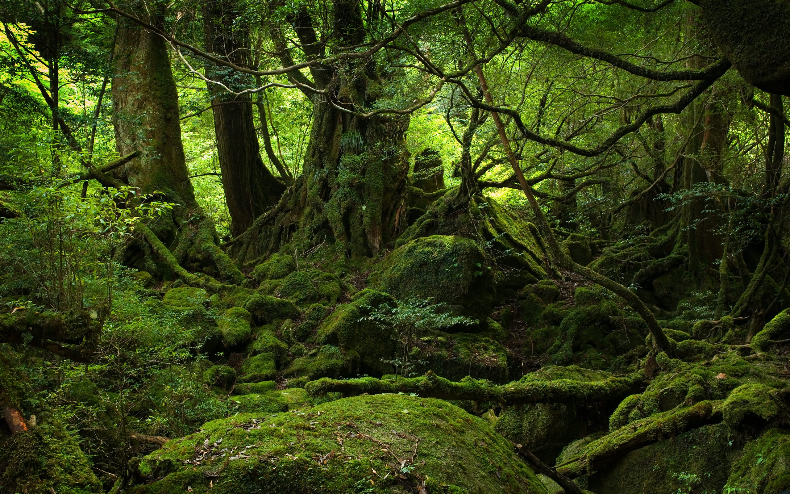Forest Wallpapers HD pictures