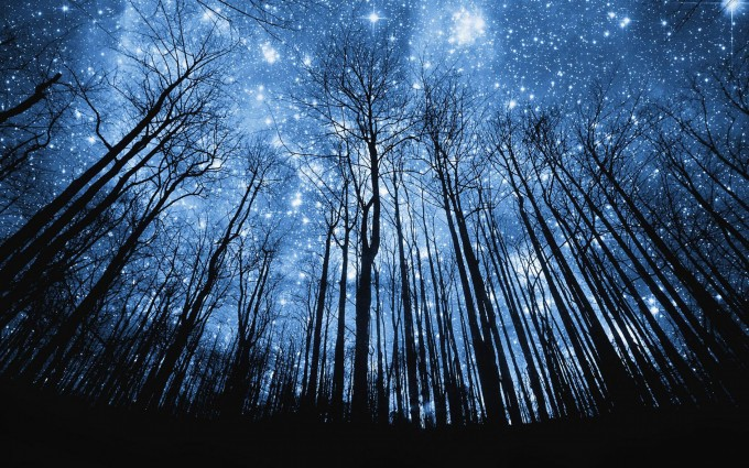 Forest Wallpapers HD stars night