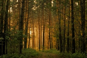 Forest Wallpapers HD cool