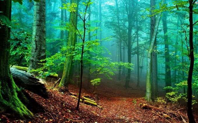 Forest Wallpapers HD slope