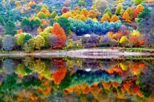 Forest Wallpapers HD colorful