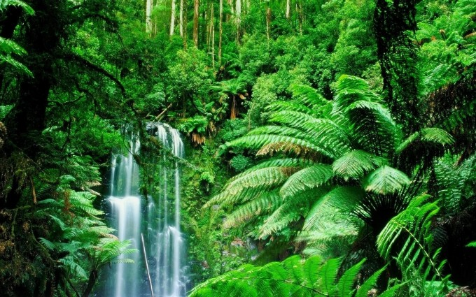 Jungle Wallpapers nature falls nice
