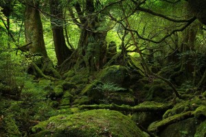 Jungle Wallpapers nature green trees