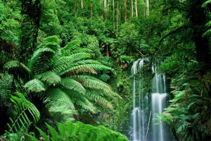 Jungle Wallpapers nature falls