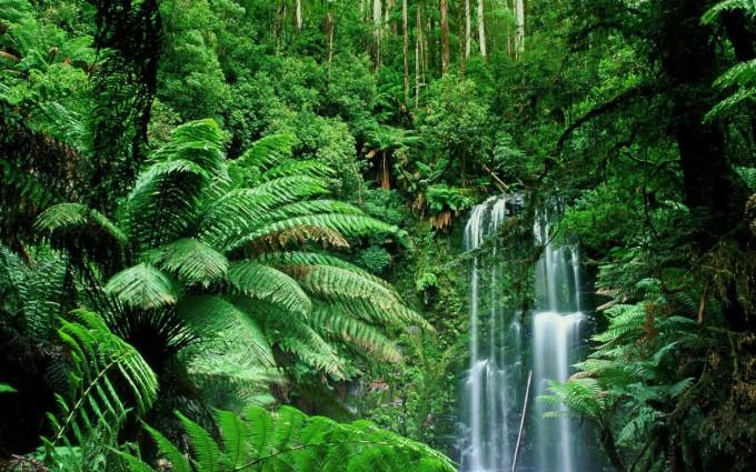 Jungle Wallpapers nature falls