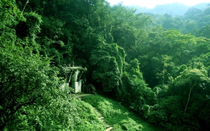 Jungle Wallpapers nature mountains
