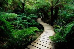 Jungle nature Wallpapers path way