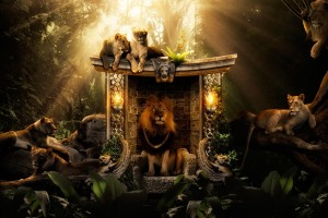 Jungle Wallpapers HD lion king