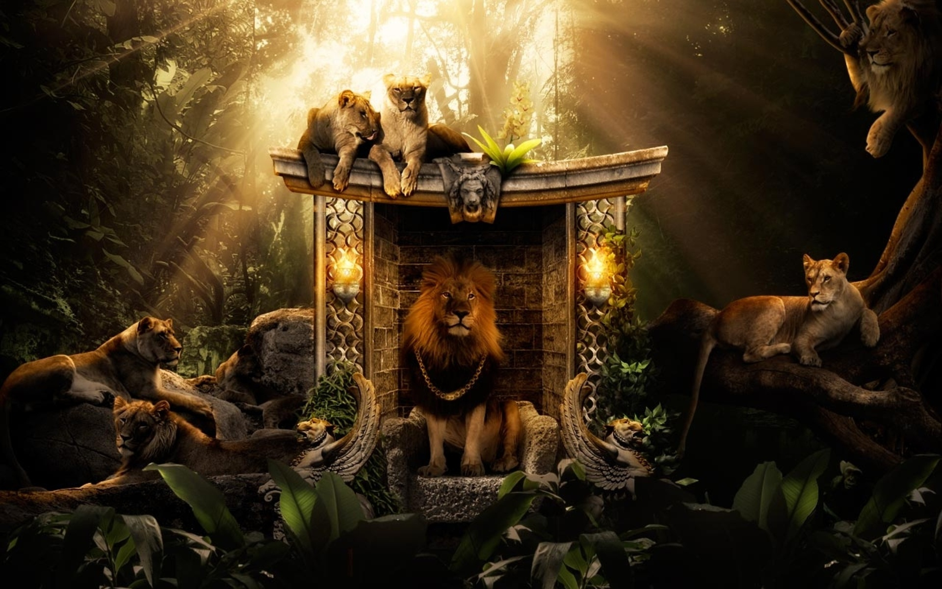 Jungle Wallpapers HD A22