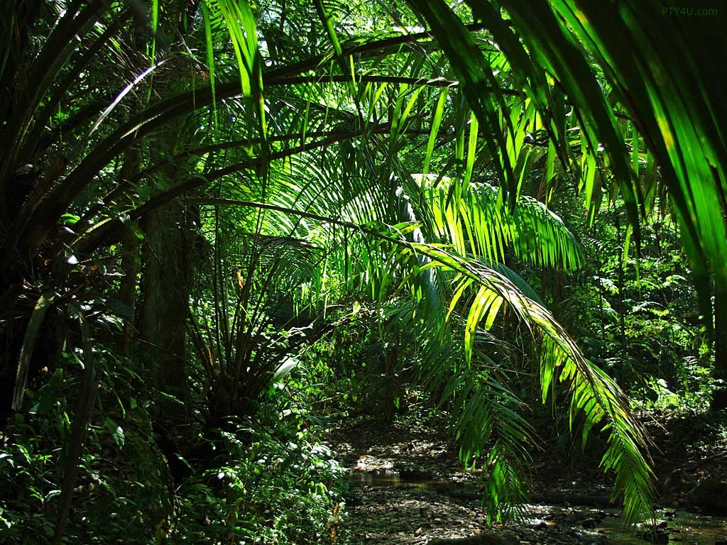 Jungle Wallpapers HD plants