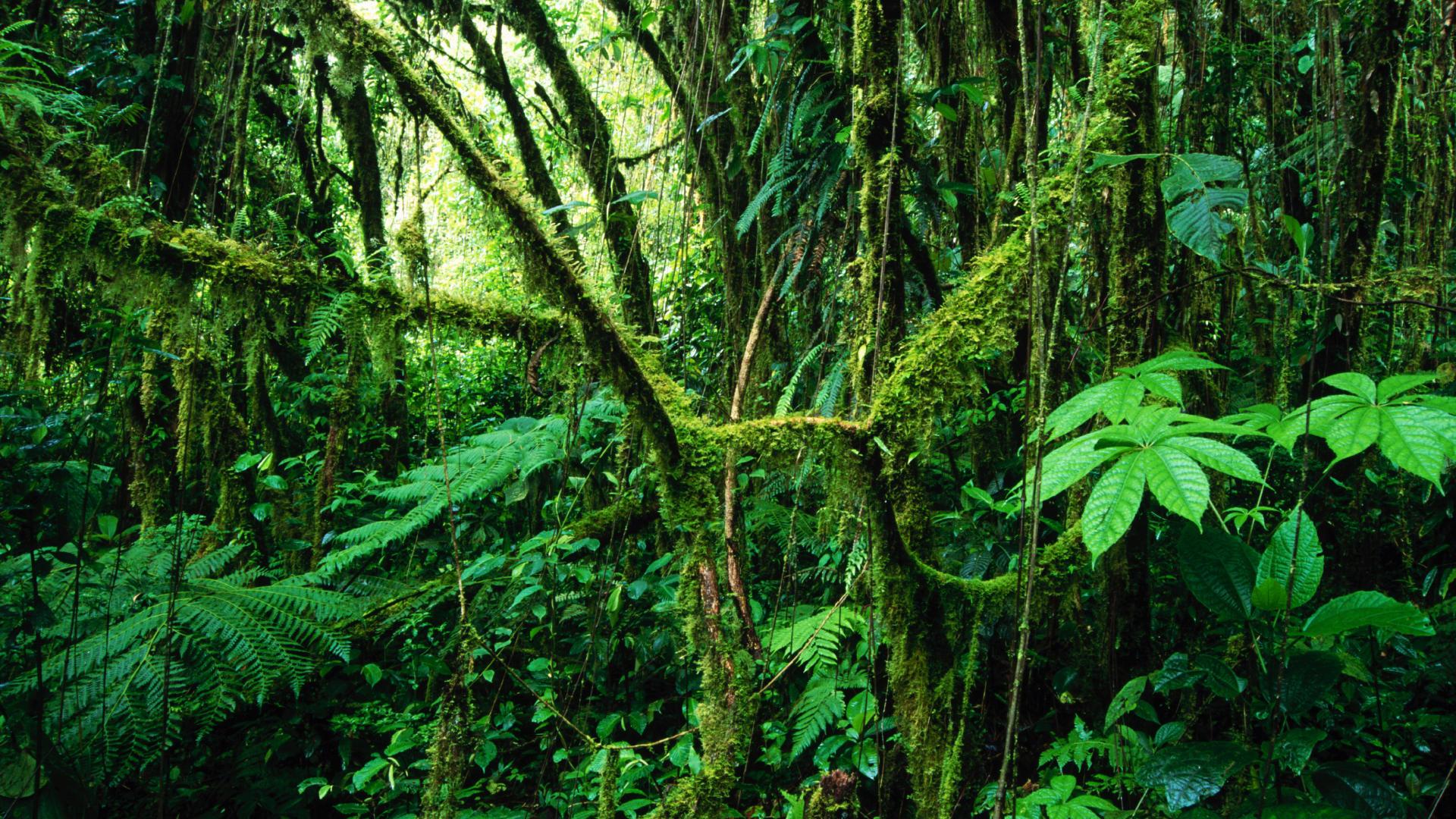 Jungle Wallpapers HD A5