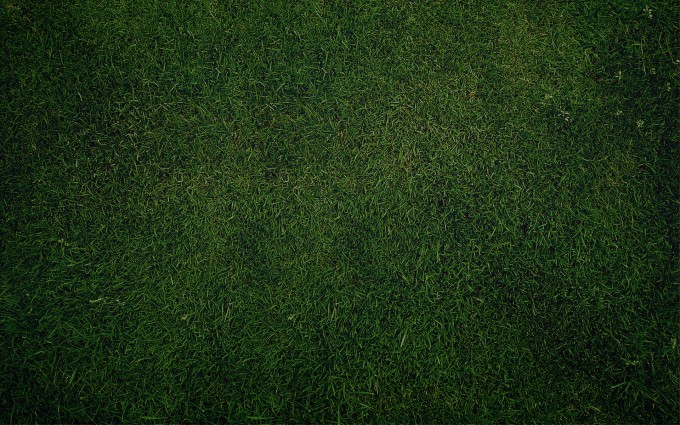 Plain Wallpapers HD green grass