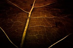 Plain Wallpapers HD brown leaf