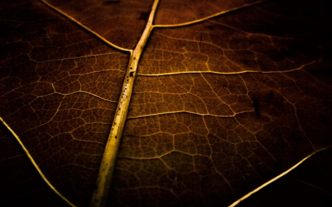 Plain Wallpapers HD brown leaf