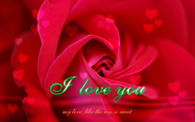 Red Roses Wallpapers HD A39 i love you