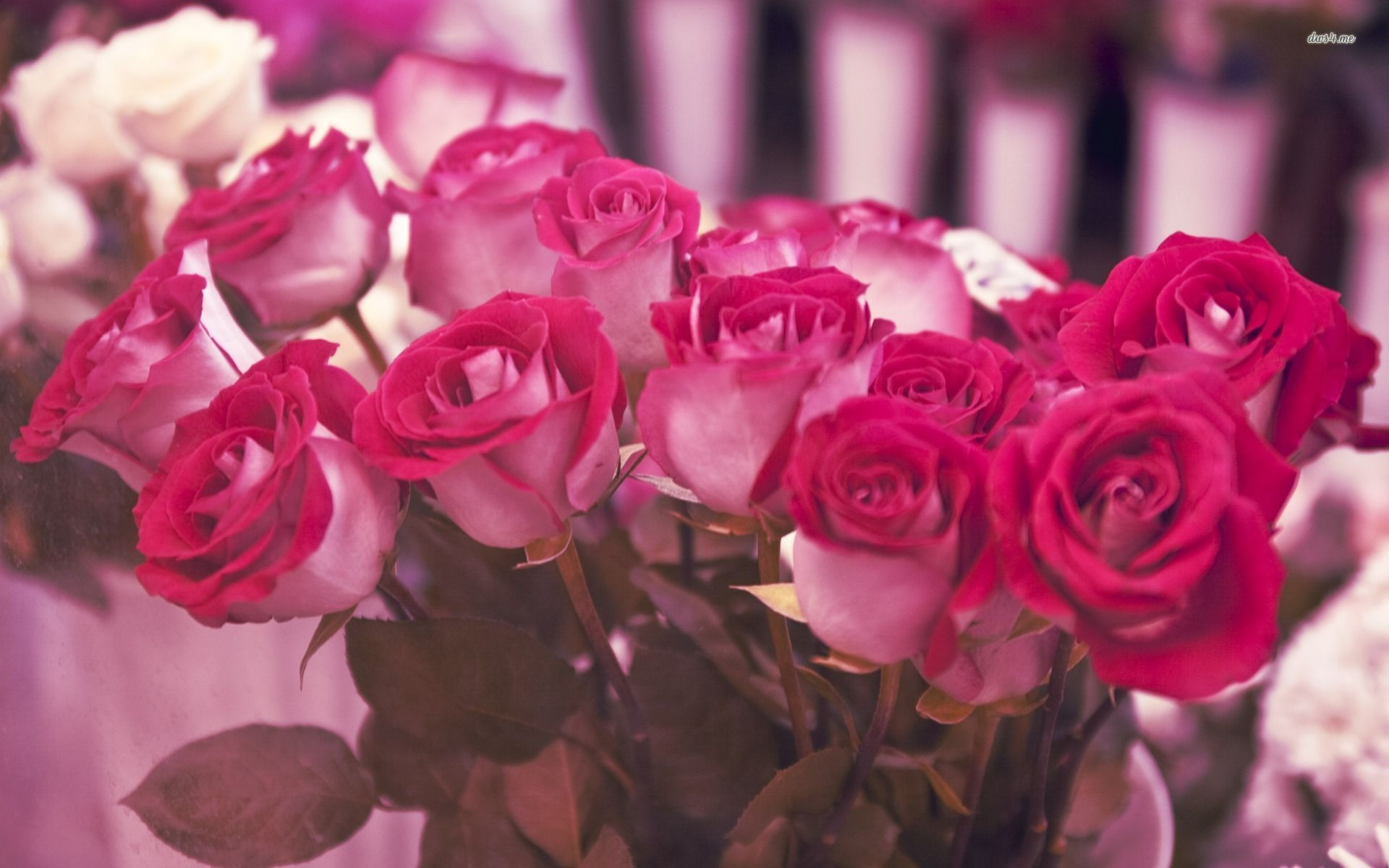 Red Roses Wallpapers HD A39 pink