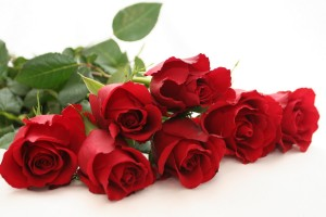 Red Roses Wallpapers HD A39 lovely