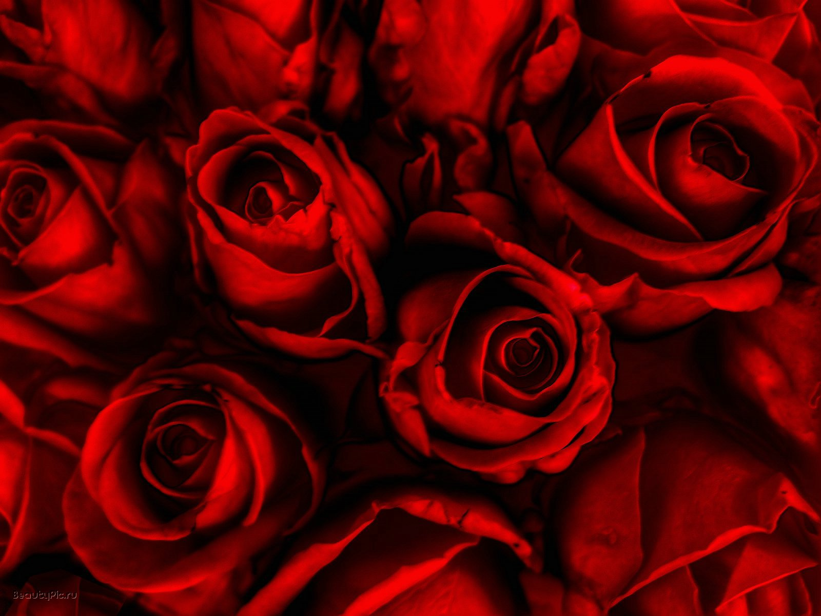 Red Roses Wallpapers HD A30