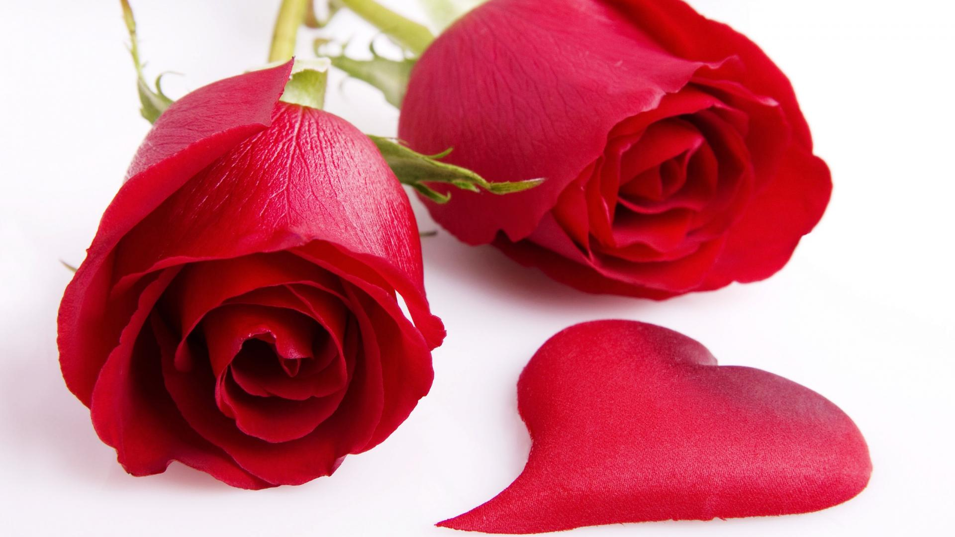Red Roses Wallpapers HD A37