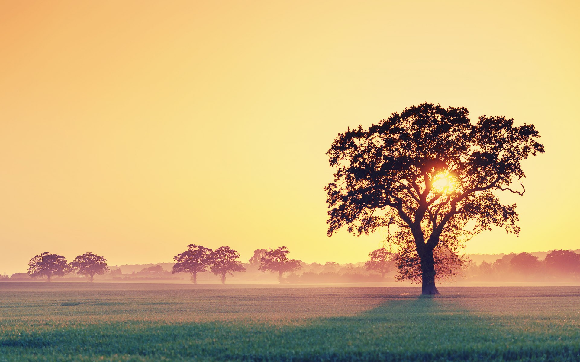 Sunset Wallpapers HD tree