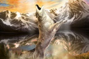 Wolf Wallpapers HD A1