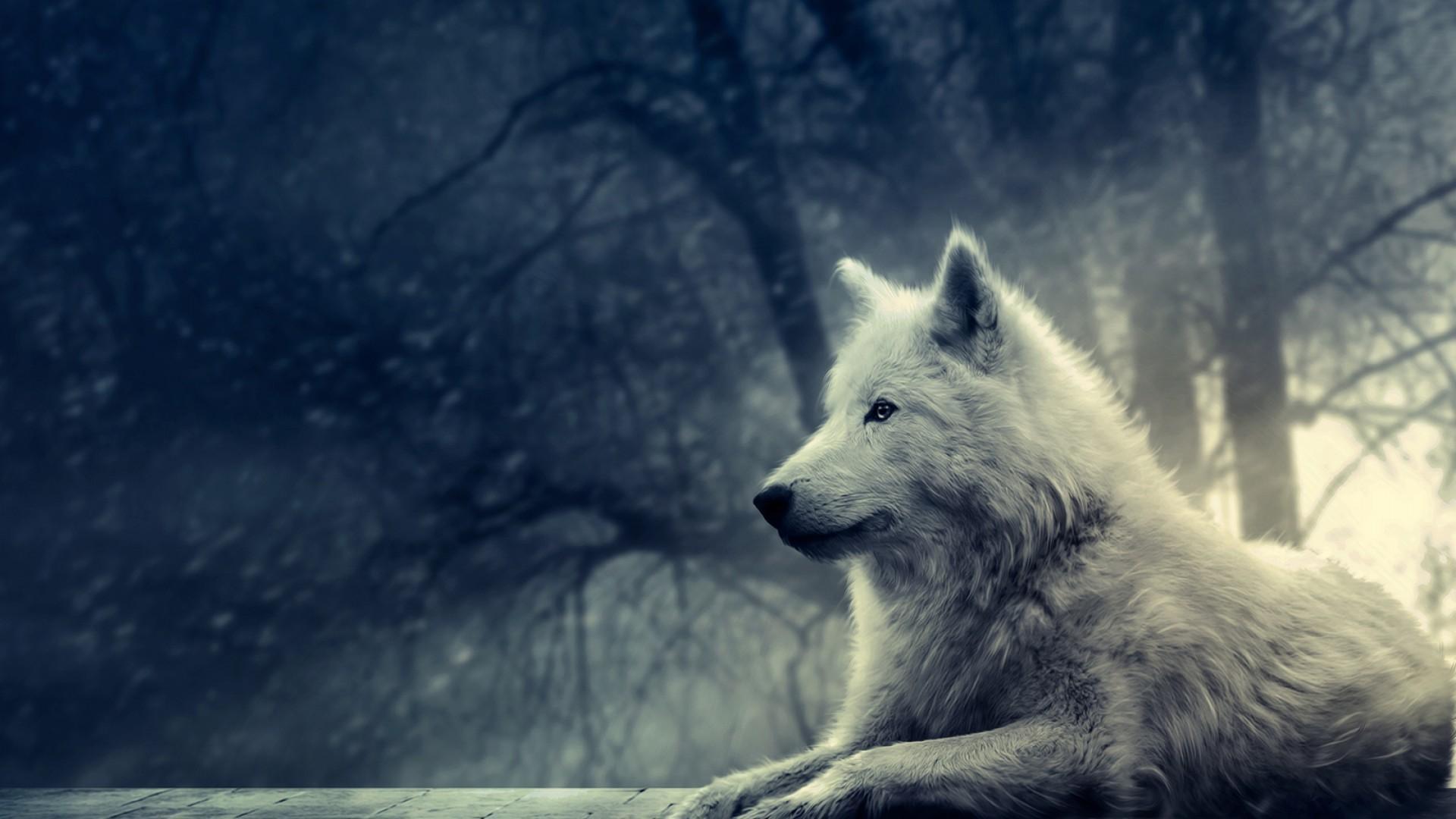 arctic wolf wallpaper