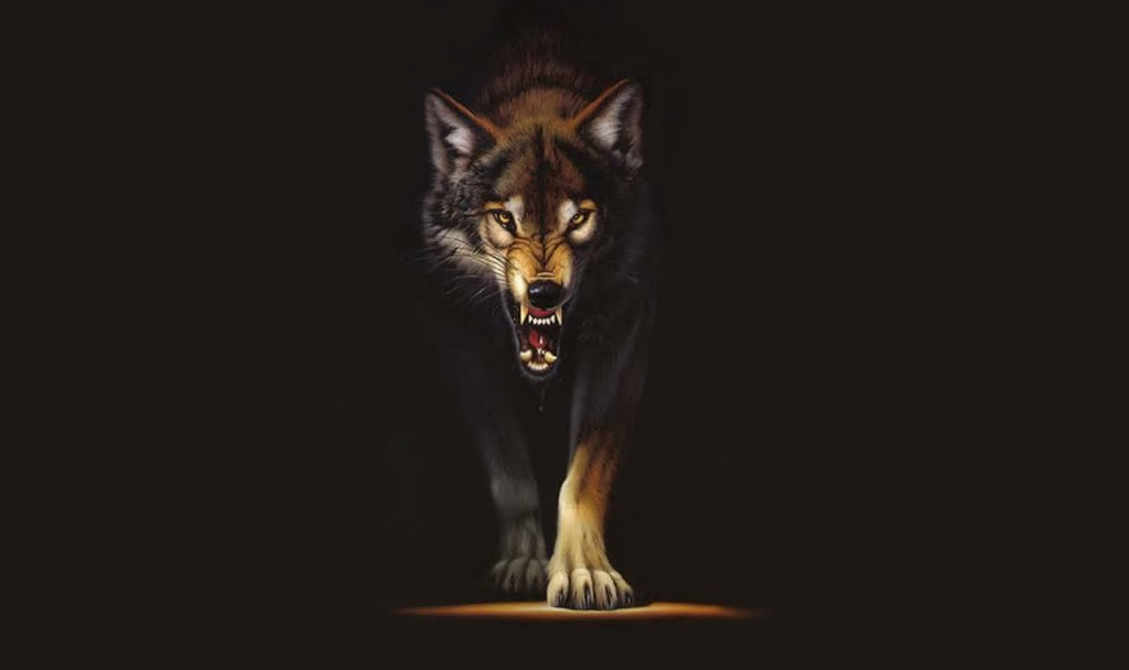 Wild Animal Wolf Wallpapers Hd 51074 Wallpaper: Wolf Wallpapers HD A16 - HD Desktop Wallpapers