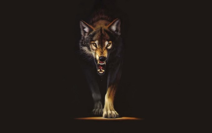 angry wolf wallpaper grey gray