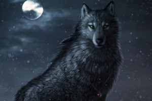 dark wolf wallpaper eyes