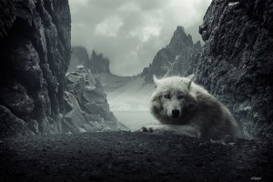 Wolf Wallpapers HD A4