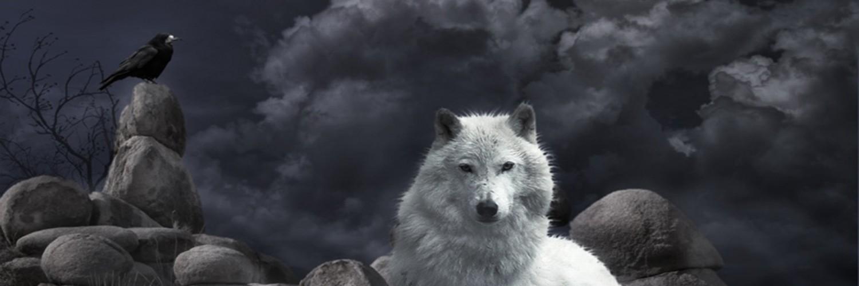 wolf computer wallpaper hd - photo #36