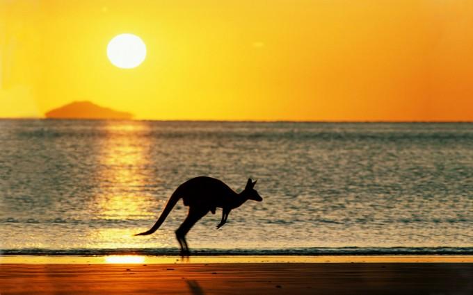 beach sunset wallpaper australia