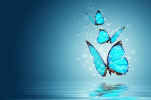 blue butterfly wallpaper