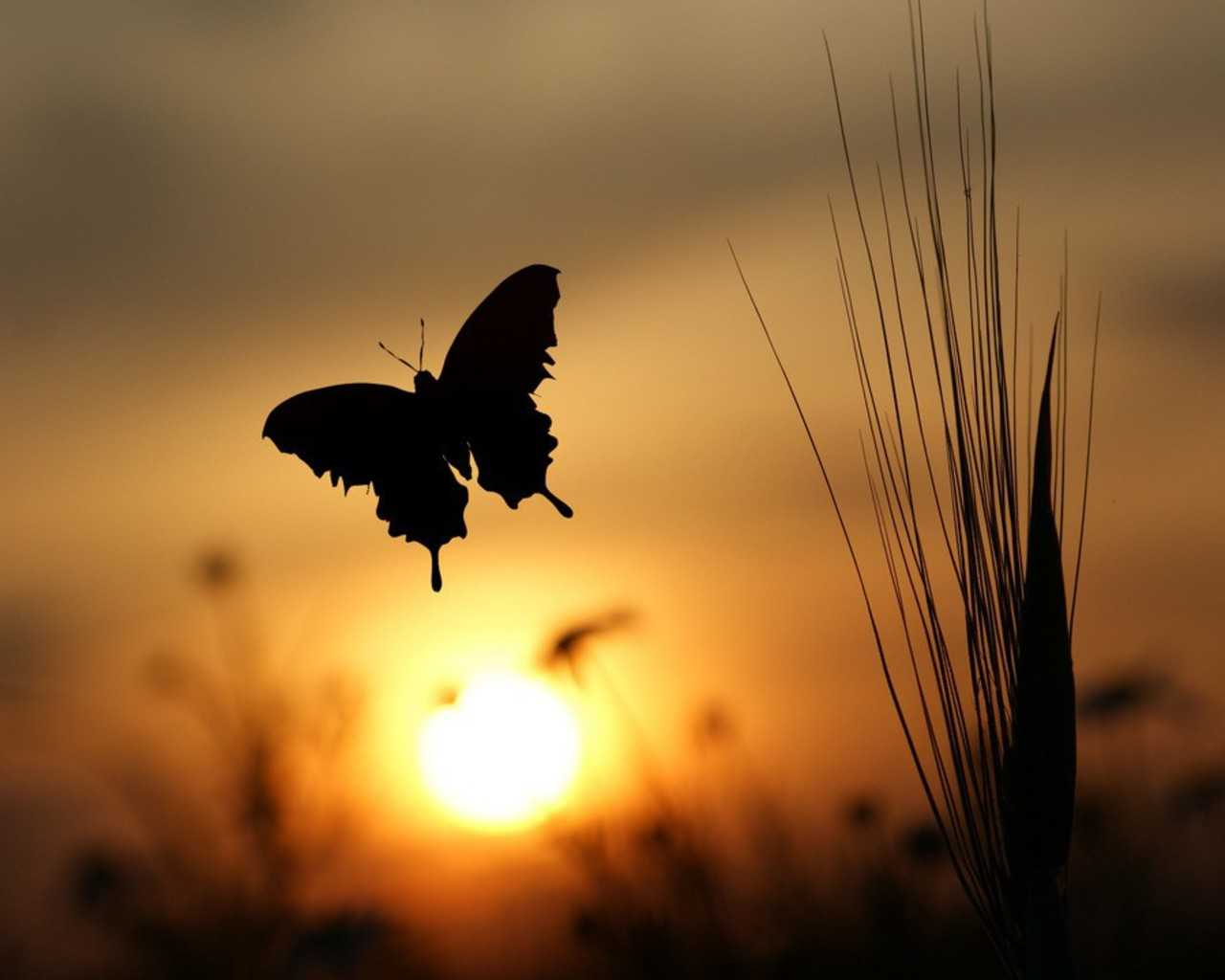 butterfly background sunrise