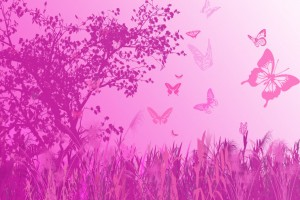 butterfly hd wallpapers pink