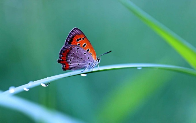 butterfly images download