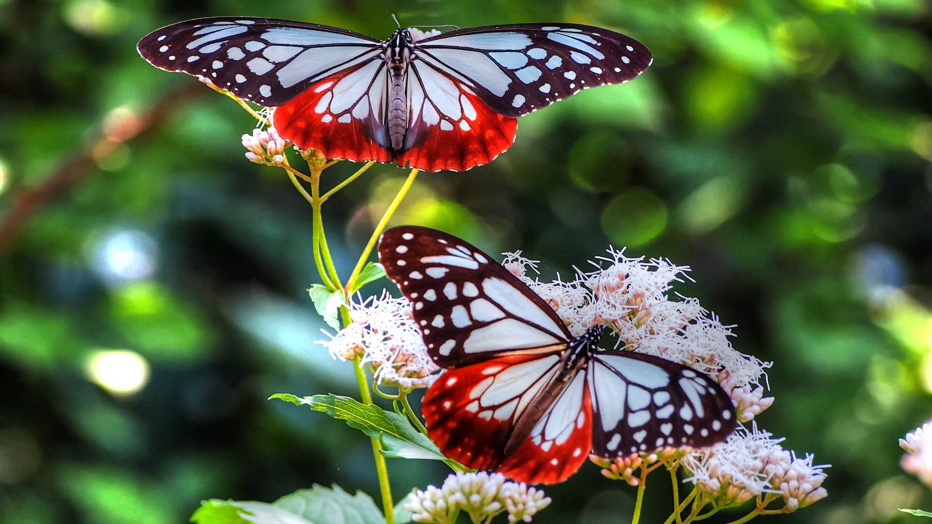 butterfly images free download