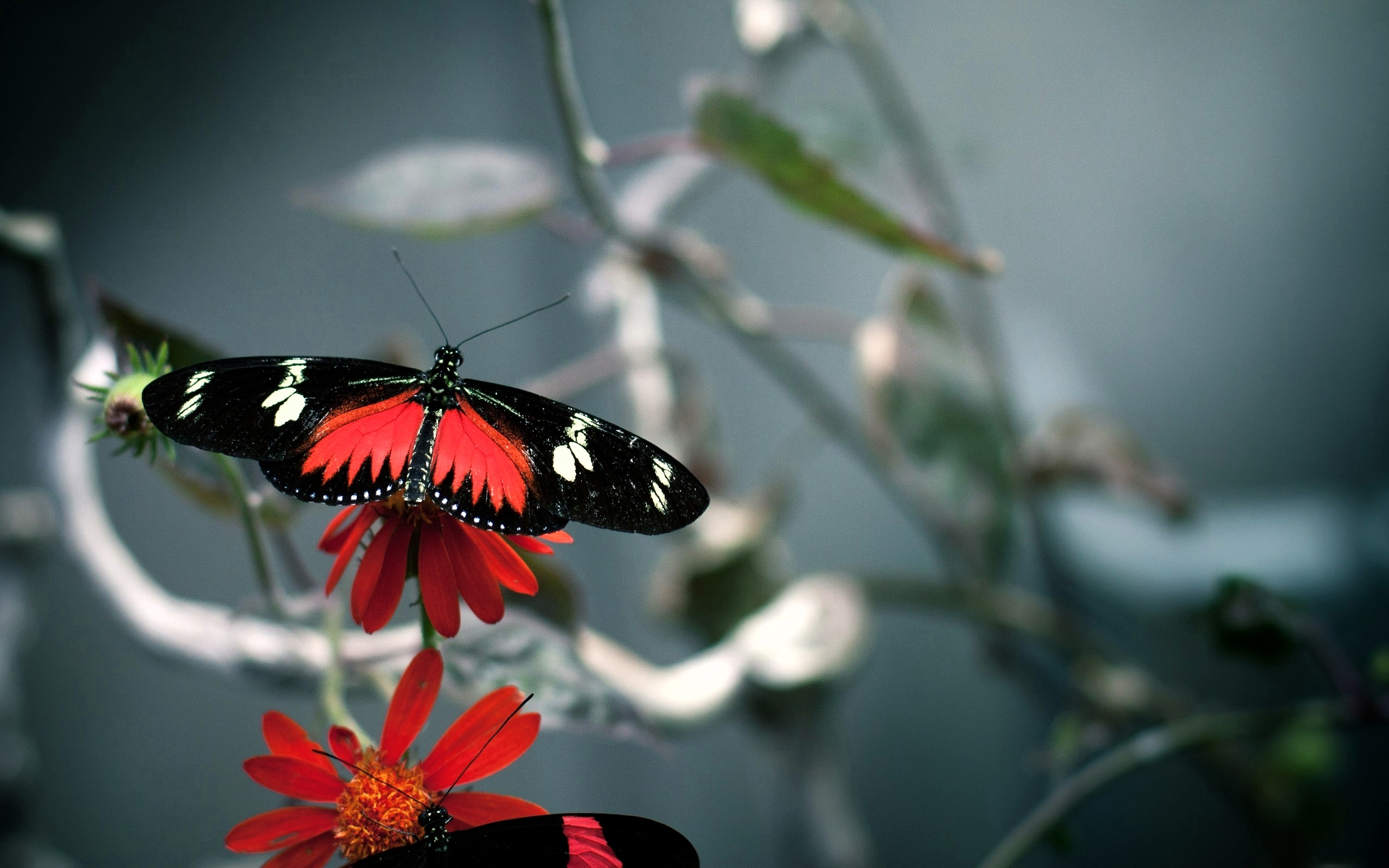 butterfly pictures download