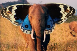 butterfly wallpaper elephant