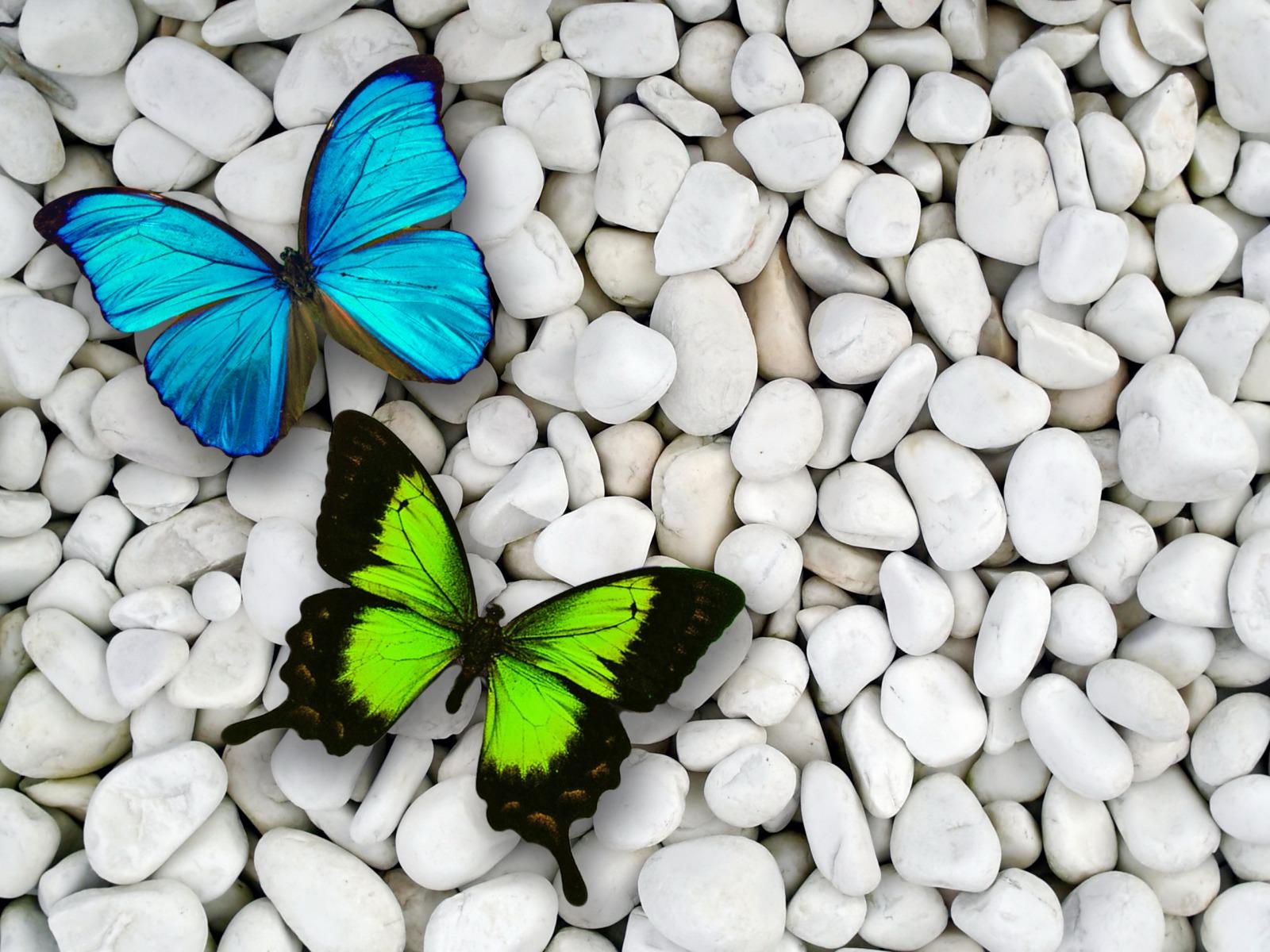 butterfly wallpaper pebbels HD Desktop Wallpapers 4k HD