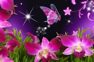butterfly wallpaper pink