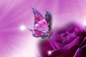 butterfly wallpaper purple
