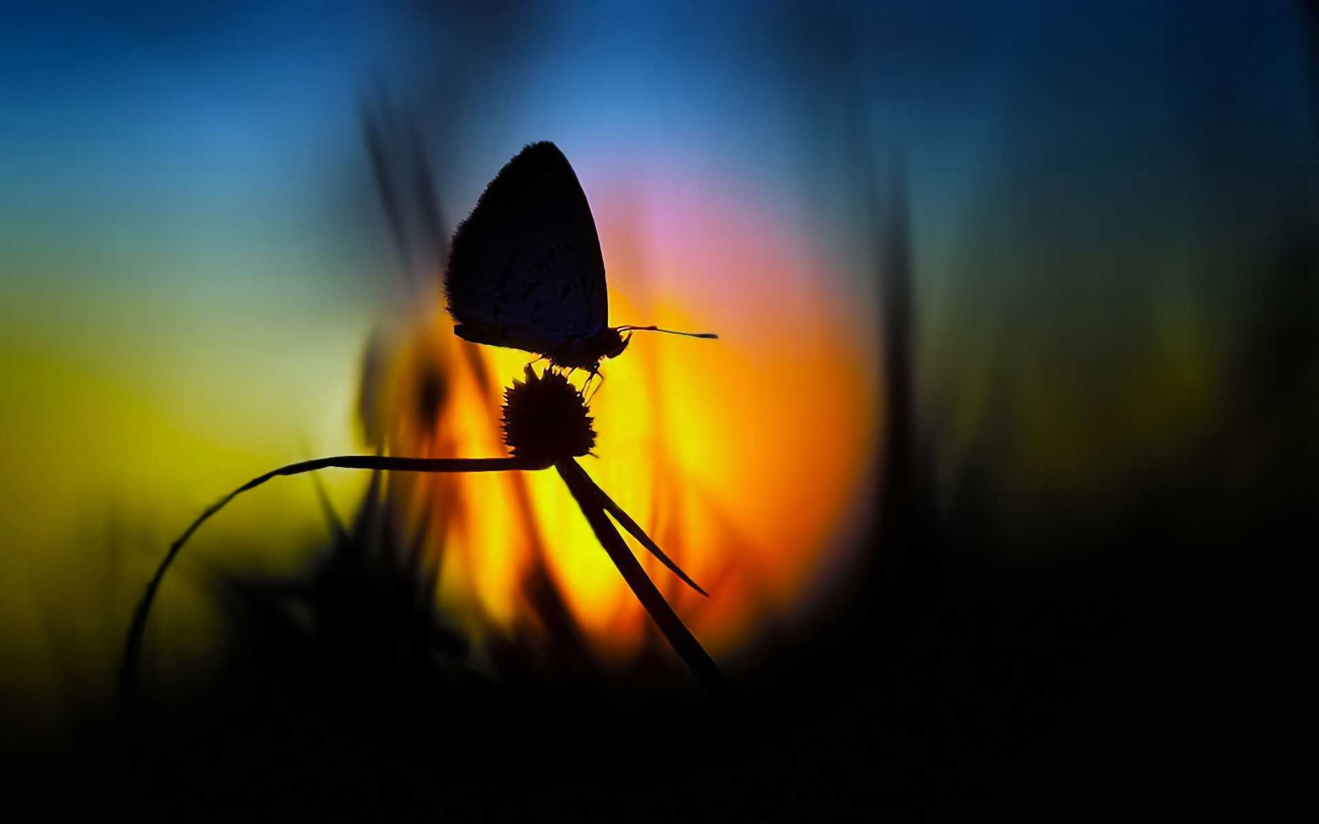 butterfly wallpapers download