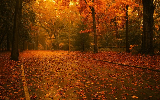 fall backgrounds for computer Autumn