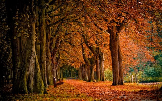 fall hd wallpaper Autumn